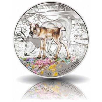 Jungtiere: Karibu, 20 Dollar Silbermünze mit Farbauflage, Canada