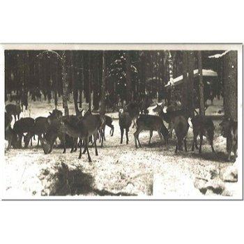 8243 Hintersee - Postcard